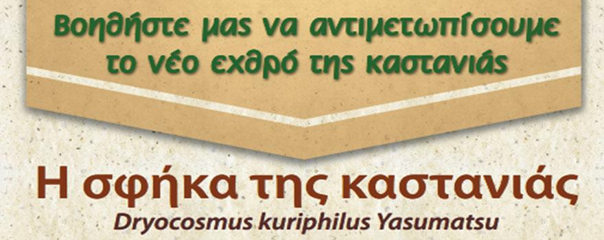 sfhka-kastanias-slider