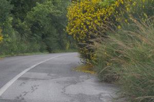 Καθαρισμός βλάστης οδικού δικτύου