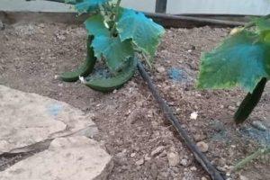 Αστικός Λαχανόκηπος